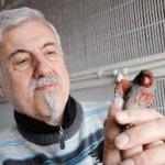 Il canarino più bello d'Italia appartiene a Franco Sensibile