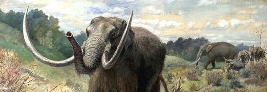 Mastodonte – immagine di Chas R. Knight -1923