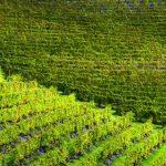 UNESCO: paesaggi vitivinicoli piemontesi a Expo 2015?