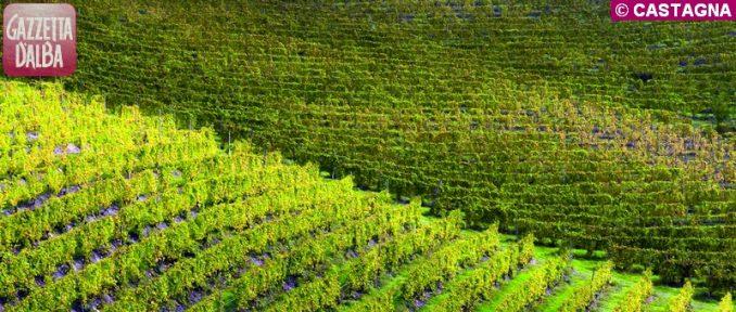 Unesco: due anni di tutela  per le colline dei vigneti