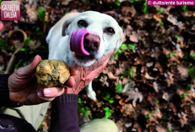 cane tartufo