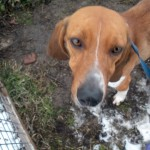 Il Rifugio Gretel organizza un corso di primo soccorso veterinario