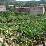 Tromba d'aria: ingenti danni all'agricoltura