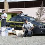 Al canile gli articoli per animali sequestrati dalla Finanza
