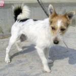 """Cani da adottare al rifugio """"Dog's world"""" di Vaccheria"""