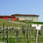 Il corso di laurea in viticoltura ed enologia resta ad Alba