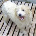 Cani in attesa di adozione al rifugio di Vaccheria