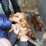 I cuccioli sequestrati sono stati quasi tutti adottati