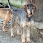 Cani da adottare al rifugio Dog's world di Vaccheria