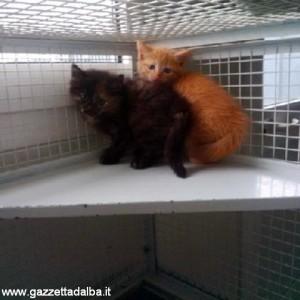 alba gattini