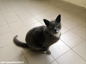 gatta trovata alba