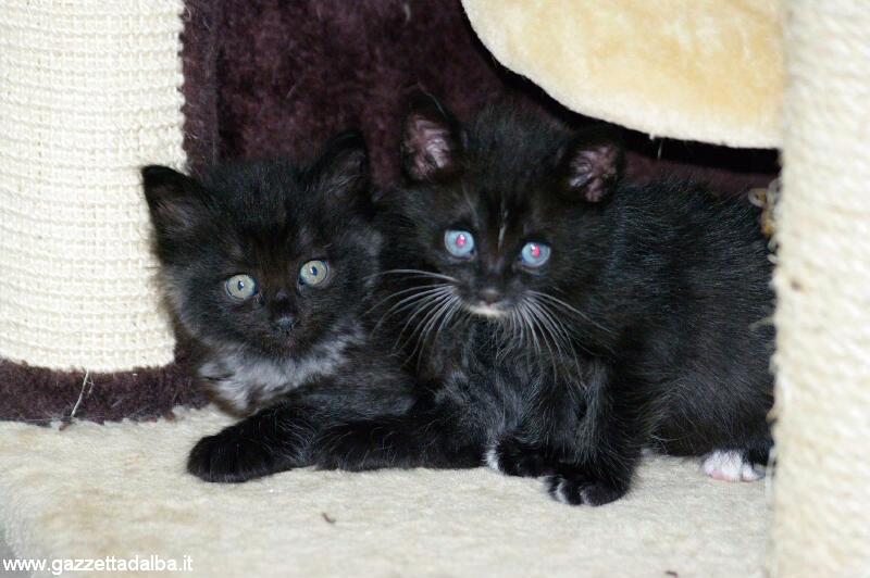 Agnese cerca persone sensibili che accolgano i suoi venti gatti