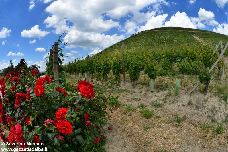 paesaggio-panorama-colline-unesco