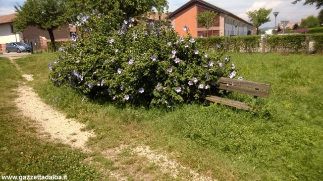 degrado-parco-san-cassiano-alba-luglio2014 (1)