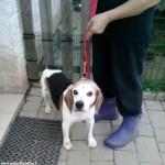 Cane ritrovato a Canale
