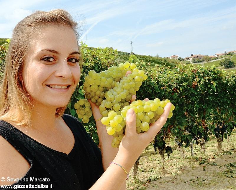 Turismo: Langhe, Monferrato e Roero lanciano la vendemmia didattica