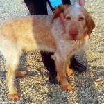 Amici di zampa ha cani e gatti da adottare al canile di Alba