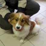 Il Rifugio di Fido ha recuperato due cani e cerca i padroni