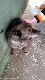 Nel 2016 ben 209 cani abbandonati hanno trovato una casa