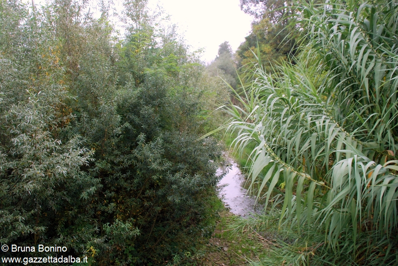 torrente Cherasca prima