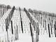 Scendono i primi fiocchi di neve ad Alba