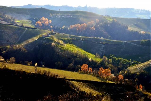 colline-paesaggi-panorama-vigneti-primavera-2015 (10)