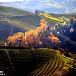 Piemonte, aumentano i turisti: Langhe e Roero tra le mete preferite