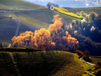 Langhe doc: storie di eretici nell'Italia dei capannoni 1