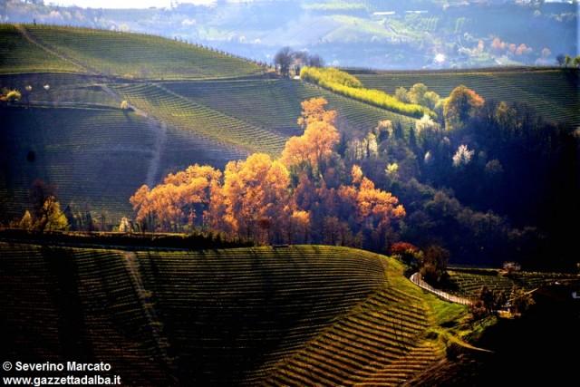 colline-paesaggi-panorama-vigneti-primavera-2015 (4)