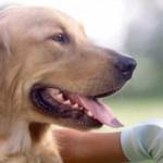 Alba, convegno sugli interventi assistiti con gli animali