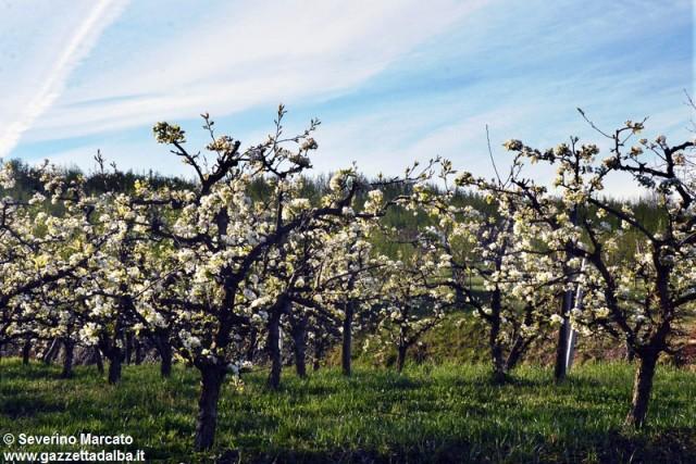 primavera-Langhe (1)