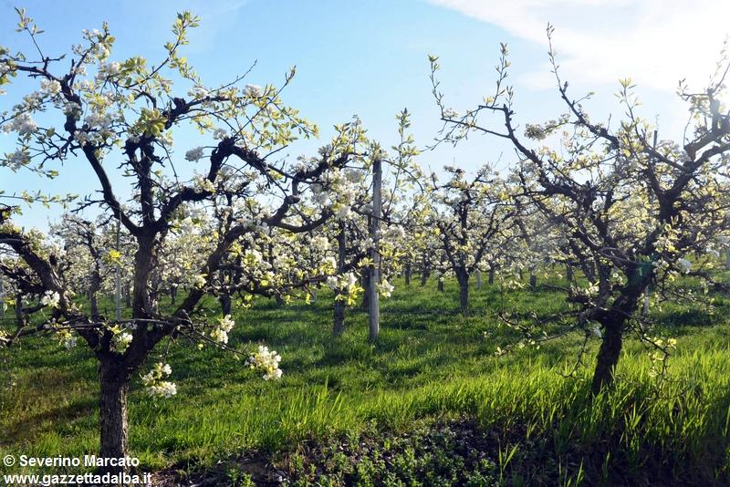 primavera-Langhe (3)