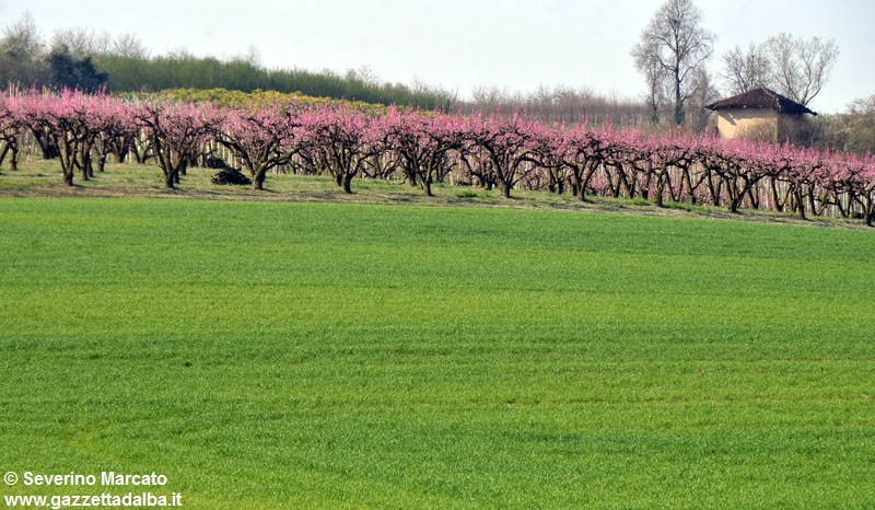 primavera-Roero (2)