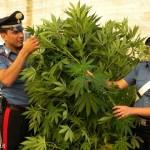 Mamma e figlio coltivavano cannabis sul balcone di casa
