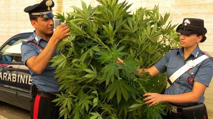 Incendio nella serra di cannabis. Denunciato un ventenne di Santo Stefano Belbo