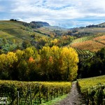 L'autunno in Langa attraverso l'obiettivo di Severino Marcato