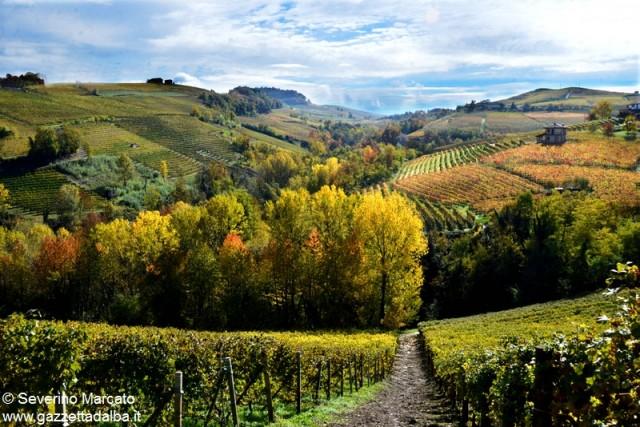 Poesia d'autunno Langa 2015 - 26