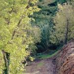 Boschi urbani ad Alba per ridurre l'inquinamento