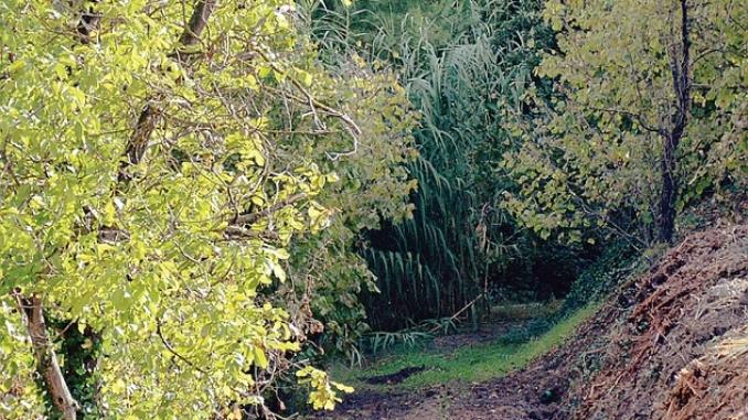 Ottomila metri quadri di bosco distrutti in Valle Uzzone