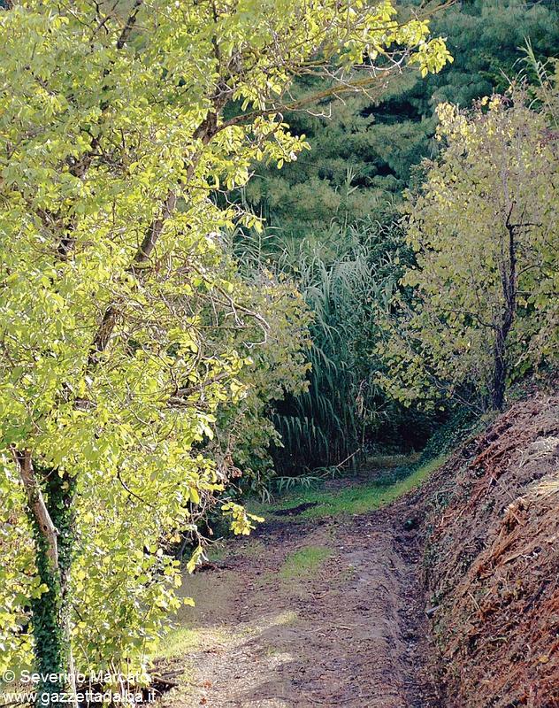 bosco san cassiano