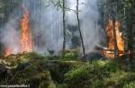 Disposto in Piemonte lo stato di massima pericolosità per gli incendi boschivi