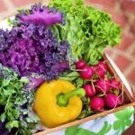 Consumando il cibo giusto si vive meglio l'estate