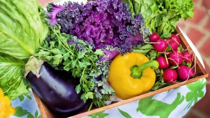 Alimentazione vegana e vegetariana: sì o no?