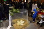 Alba l presepe degli animali  (1)
