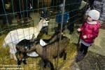 Alba l presepe degli animali  (2)