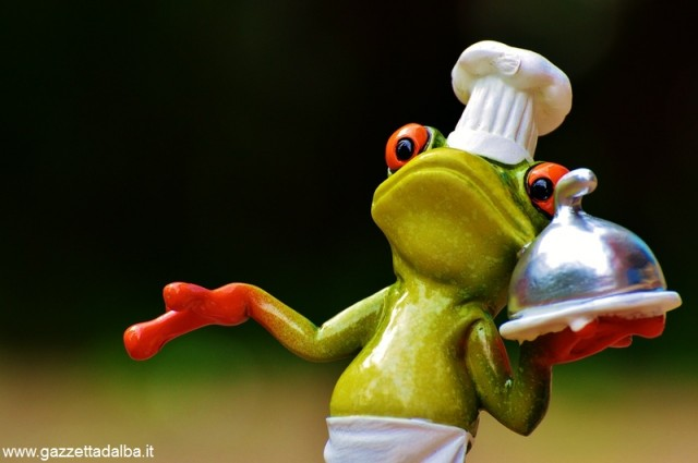 rana in cucina