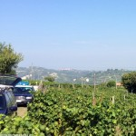 Controlli dei Carabinieri nelle vigne: arrestata una donna