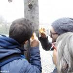 I licheni dicono che l'aria braidese negli ultimi vent'anni è migliorata