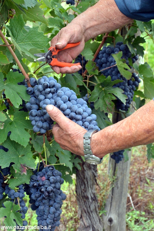 Convegno ad Asti sui cambiamenti climatici e la coltivazione della vite