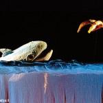 Con Burattinarte a Piobesi c'è Azzurra Balena